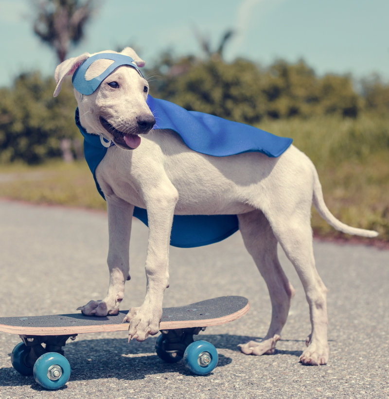 Dog on a skateboard in a superhero costume