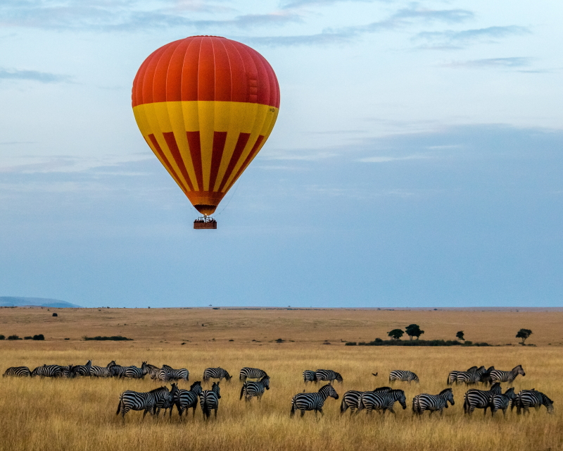 Red hot air balloon over zebras in the savanna